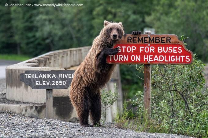 <p> Chú gấu pose hình bên cột báo giao thông. Ảnh của Jonathan Irish.</p>