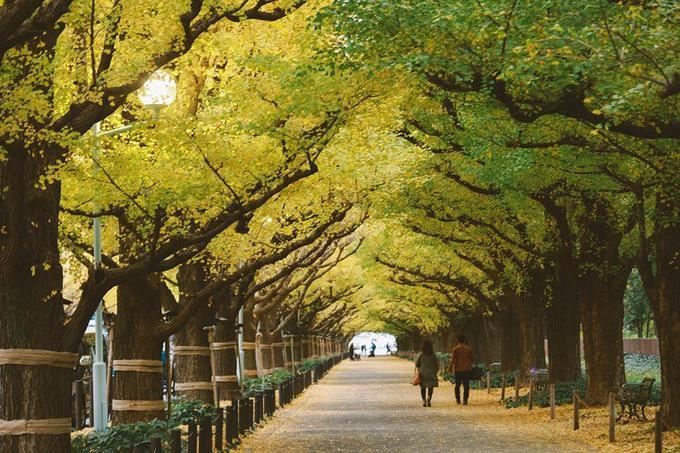 """<p> Nổi tiếng là xứ sở của loài hoa anh đào nhưng đến Nhật Bản vào tháng 11 bạn sẽ lạc vào trong khung cảnh đẹp tuyệt diệu của rừng phong đỏ. Không khí se lạnh của mùa thu, rừng phong trải dài cả cây số với lá vàng lá đỏ xen kẽ, những thảm lá vàng rụng dưới chân khiến ta như lạc vào giới cổ tích.<br /> Nhiếp ảnh gia Nguyễn Thiện Chí (1988) hiện sinh sống ở TP HCM vừa có một chuyến """"đi tìm mùa thu"""" ở Nhật Bản và anh chàng đã ghi lại những thước phim đầy nghê thuật về quang cảnh và con người nơi đây. Cùng xem bộ ảnh của chàng trai này nhé!</p>"""
