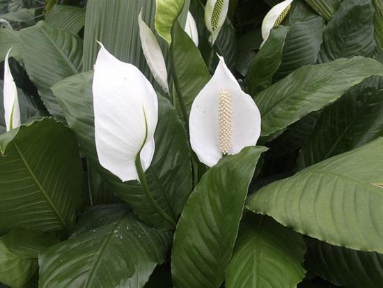Các loài thực vật này có tên tiếng Anh là gì? - 9