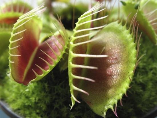 Các loài thực vật này có tên tiếng Anh là gì? (2) - 2