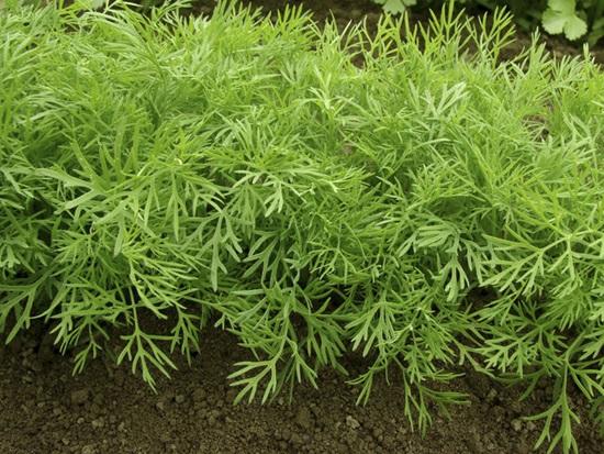 Các loài thực vật này có tên tiếng Anh là gì? (2) - 3