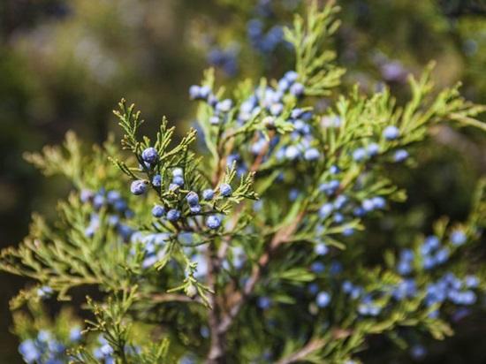 Các loài thực vật này có tên tiếng Anh là gì? (2) - 11