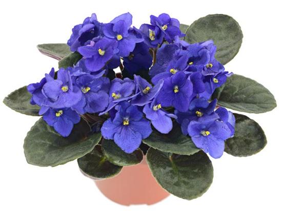 Các loài thực vật này có tên tiếng Anh là gì? - 8