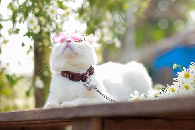 """<p> Chỉ sau vài giờ chia sẻ, bộ ảnh về Roger đã thu hút hàng nghìn lượt yêu thích và chia sẻ. Nhiều lời khen ngợi dành cho chú mèo dễ thương được để lại dưới bài đăng: """"Đáng yêu quá"""", """"Đúng là boss nhà người ta"""", """"Thánh diễn sâu luôn"""", """"Thần thái đầy... chảnh mèo"""".</p>"""