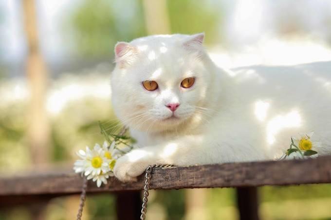 """<p> Roger là chú mèo đực 4 tuổi rất """"xinh trai"""".</p>"""