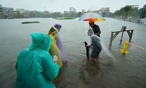 Người Đà Nẵng giăng lưới bắt cá giữa phố sau mưa lớn