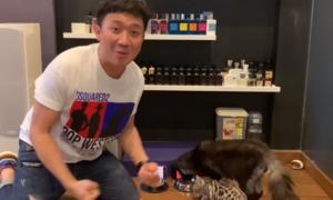 Mèo cưng của Trấn Thành dự đoán Việt Nam thắng Malaysia