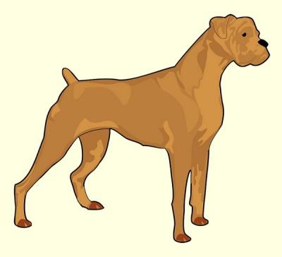 Con chó