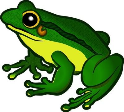 Con ếch