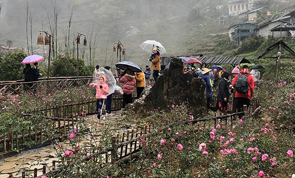 Những ngày qua, bản Cát Cát (cách trung tâm thị trấn Sa Pa 2m) cũng đón lượng người ghé thăm lớn. Trời đổ mưa khá lớn vào chiều và tối nhưng dòng người vẫn bước đi để tận hưởng cái lạnh.