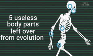 5 bộ phận chưa tiến hóa hết trên cơ thể người