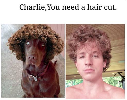 Chính vì anh chàng chẳng mấy khi bận tâm đến tóc tai, fan đã nhiều lần phải năn nỉ: Xin anh hãy cắt tóc.