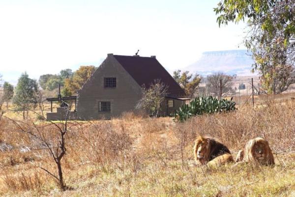 Ngôi nhà giữabầy sư tử.