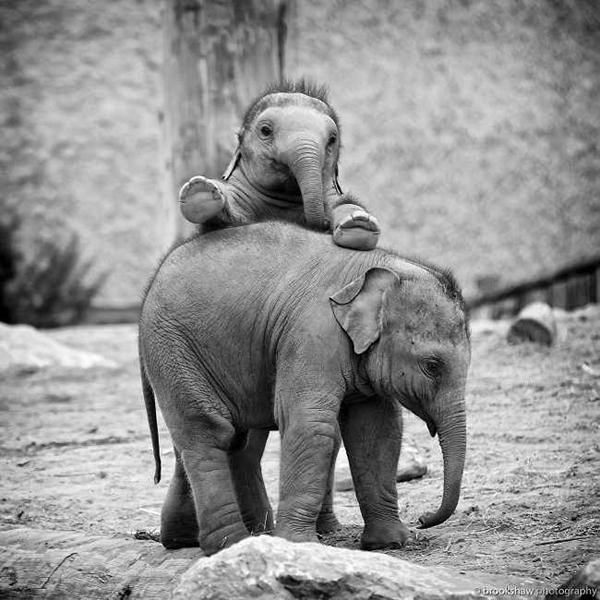 10 bức hình kute lạc lối về voi con khiến bạn phì cười - 8