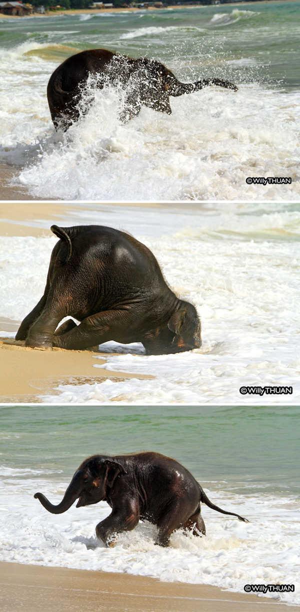10 bức hình kute lạc lối về voi con khiến bạn phì cười - 4