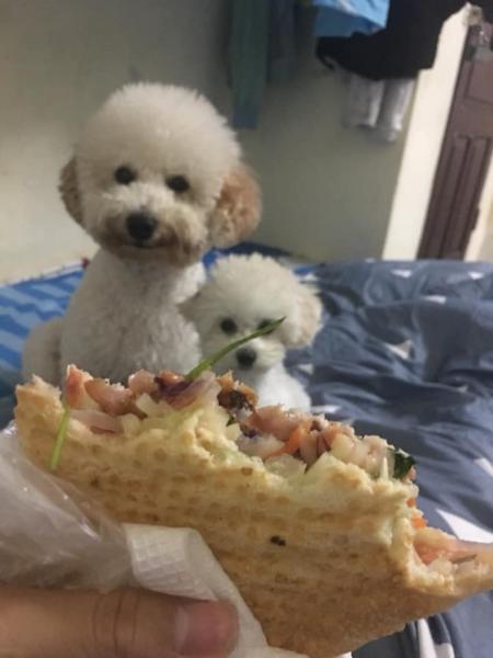 Bộ mặt của những chú chó khi thấy đồ ăn.