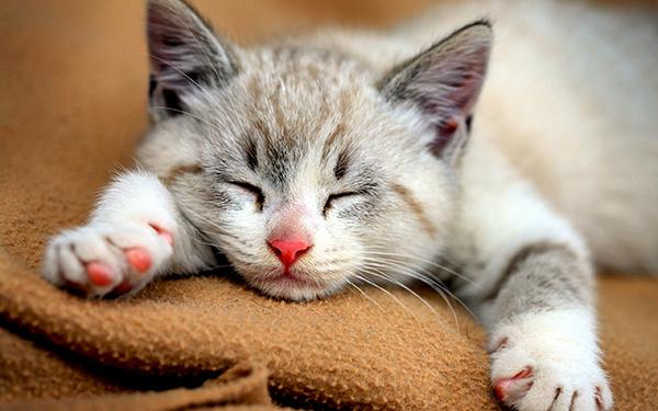 Giấc mơ về mèo cảnh báo điều chẳng lành - 1