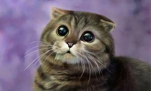 Giấc mơ về mèo cảnh báo điều chẳng lành