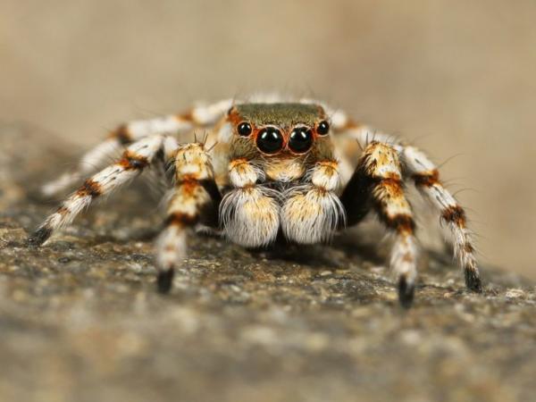 Mơ thấy nhện và những điềm báo đáng ngờ
