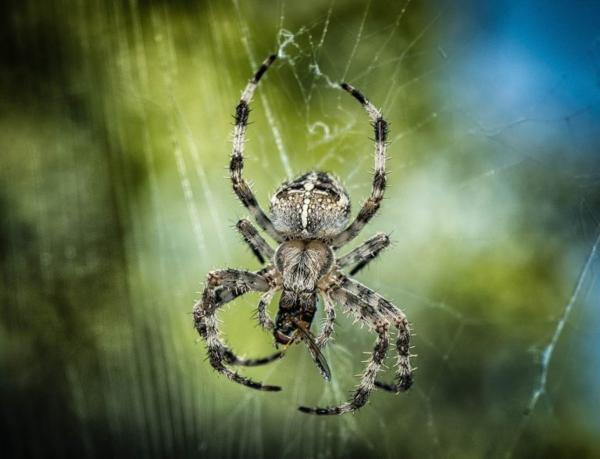 Mơ thấy nhện và những điềm báo đáng ngờ - 1