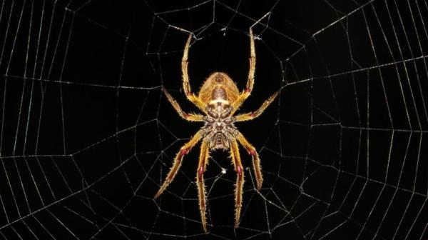 Mơ thấy nhện và những điềm báo đáng ngờ - 2