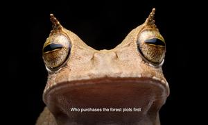 Loài ếch 'mọc sừng' bí ẩn