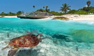 Trắc nghiệm: Khả năng sinh tồn trên đảo hoang của bạn giỏi thế nào?