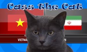 Chú mèo tiên tri ở Anh dự đoán trận Việt Nam gặp Iran
