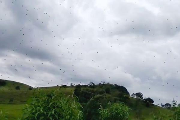Hàng trăm kẻ xâm lược 8 chân bay giữa không trung.
