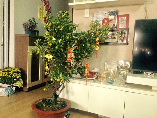 Quất là một trong những loại cây không thể thiếu trong nhà ngày Tết.