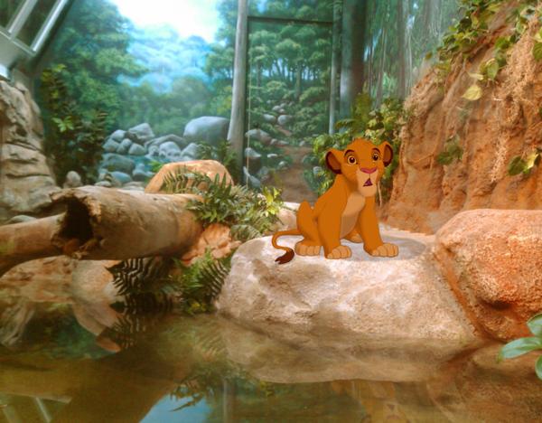Thay vì được sống trong khu rừng của mình, Simba lại phải sống tại sở thú.