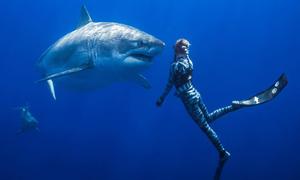 Thợ lặn Hawaii 'vui đùa' cùng cá mập trắng khổng lồ