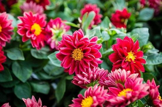 Đọc vanh vách các loại hoa ngày Tết