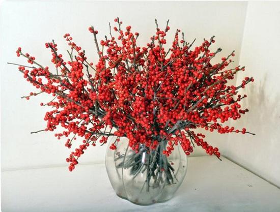 Đọc vanh vách các loại hoa ngày Tết (2) - 4