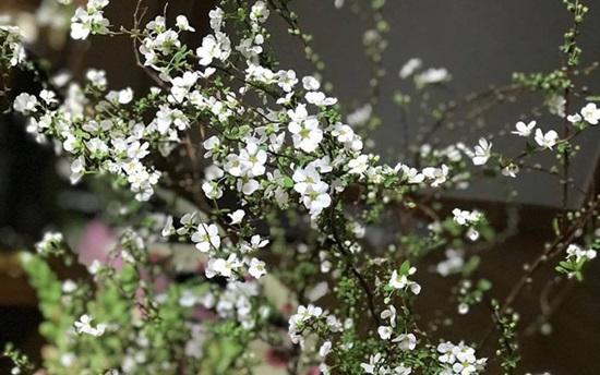 Đọc vanh vách các loại hoa ngày Tết (2) - 5