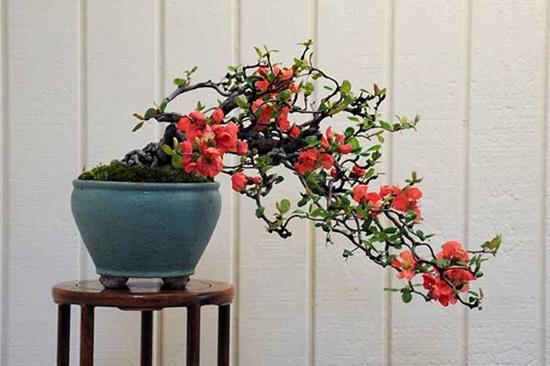 Đọc vanh vách các loại hoa ngày Tết (2) - 7