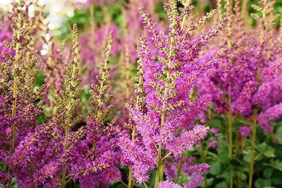 Đọc vanh vách các loại hoa ngày Tết - 9