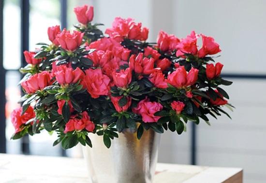 Đọc vanh vách các loại hoa ngày Tết (2)