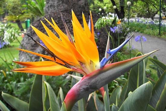 Đọc vanh vách các loại hoa ngày Tết - 2