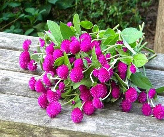 Đọc vanh vách các loại hoa ngày Tết (2) - 2