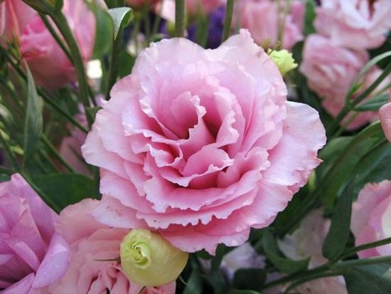 Đọc vanh vách các loại hoa ngày Tết (2) - 3