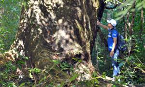 Hẹn hò hội bạn trong rừng Nam Cát Tiên
