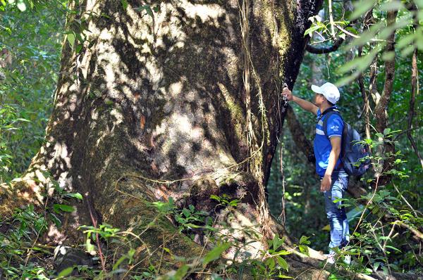 Các bạn trẻ yêu thích khám phá, phiêu lưu mạo hiểm có thể trekking xuyên rừng.
