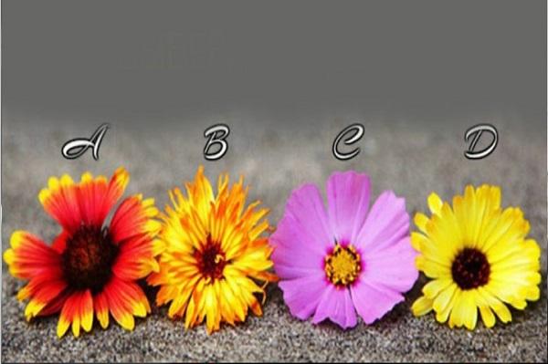 Trắc nghiệm: Đọc vị khái quát con người bạn qua bông hoa ưa thích