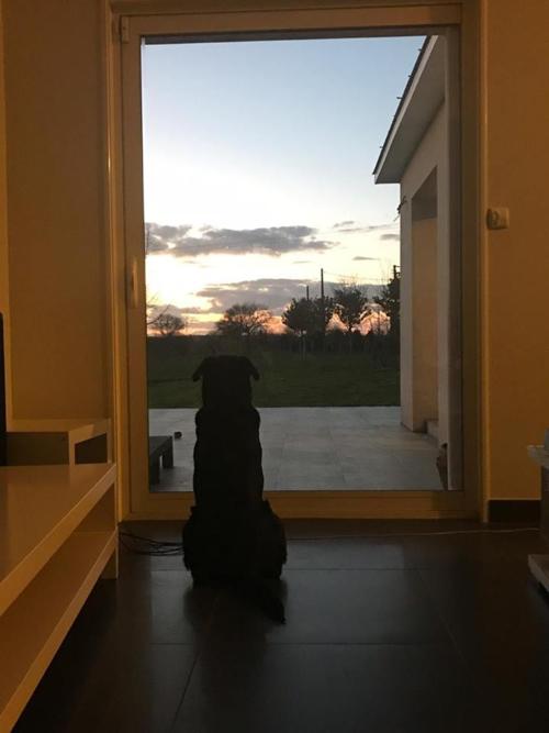 Chú chó Nala đứng đợi cậu chủ Sala trước cửa nhà, được chị gái cầu thủ tài hoa bạc mệnh chia sẻ.