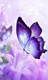 Trắc nghiệm: Chú bướm nào nhìn trúng bí mật tình yêu mà bạn đang cất giữ? - 1
