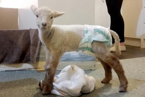 Sinh ra là phận cừu nhưng lúc nào cũng nghĩ mình là chó - 4