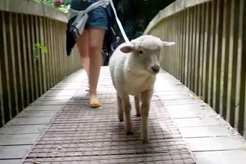 Sinh ra là phận cừu nhưng lúc nào cũng nghĩ mình là chó - 2