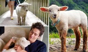 Sinh ra là 'phận' cừu nhưng lúc nào cũng nghĩ là chó