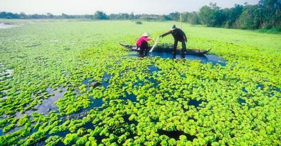 Khám phá ẩm thực các vùng miền Việt Nam - 2